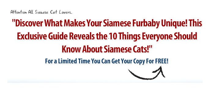 Free Siamese Cat Book Headline